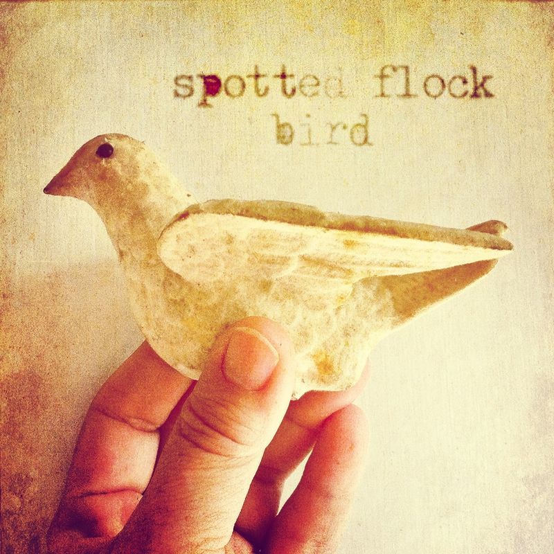 Spotted flock bird