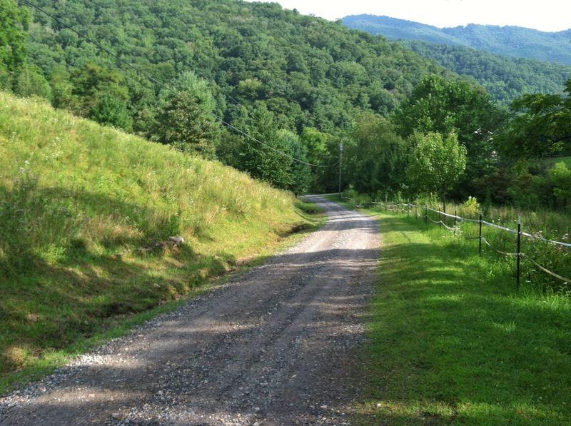 Green catnip lane