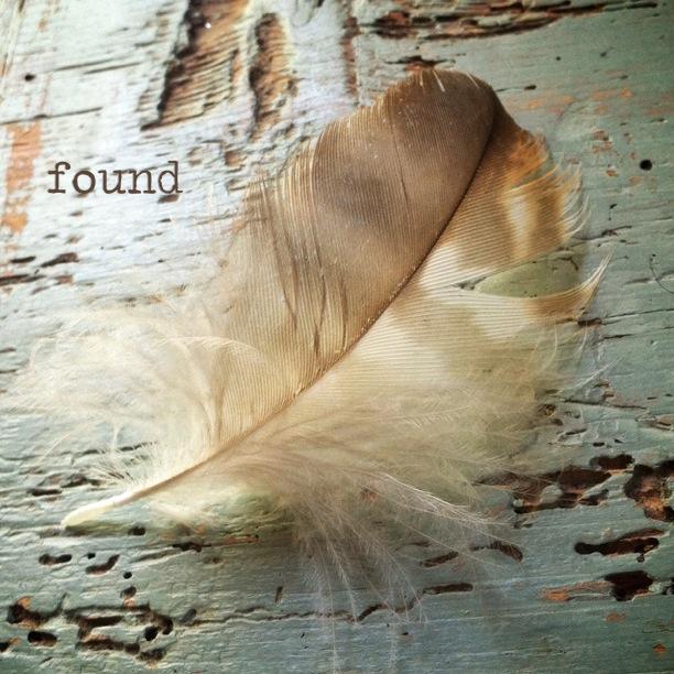 Owl contour feather