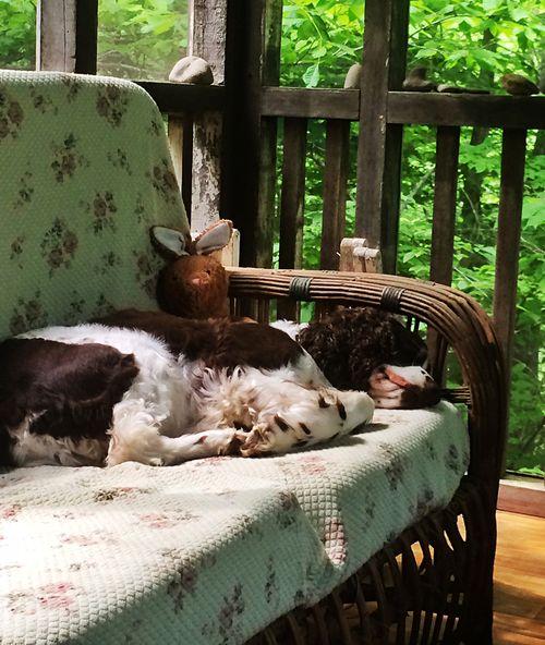 Walter takes a nap
