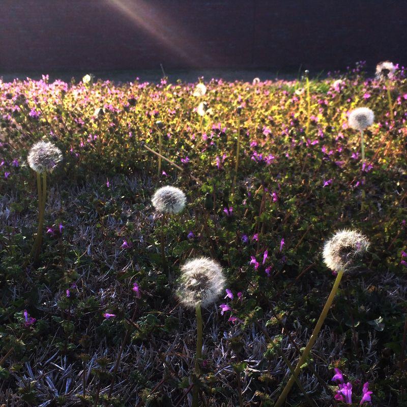 Field of puffs