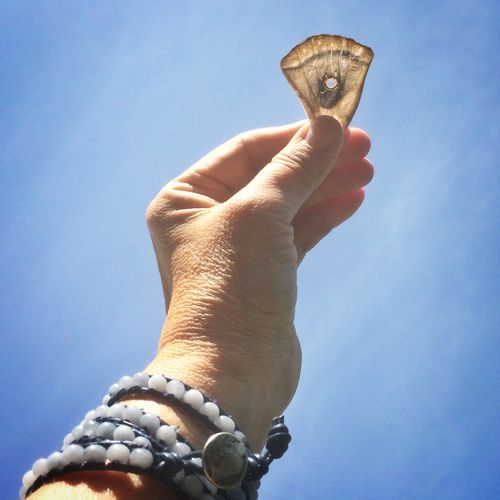Window in the wing
