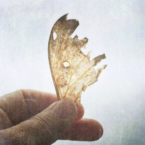 Window in the wing 1