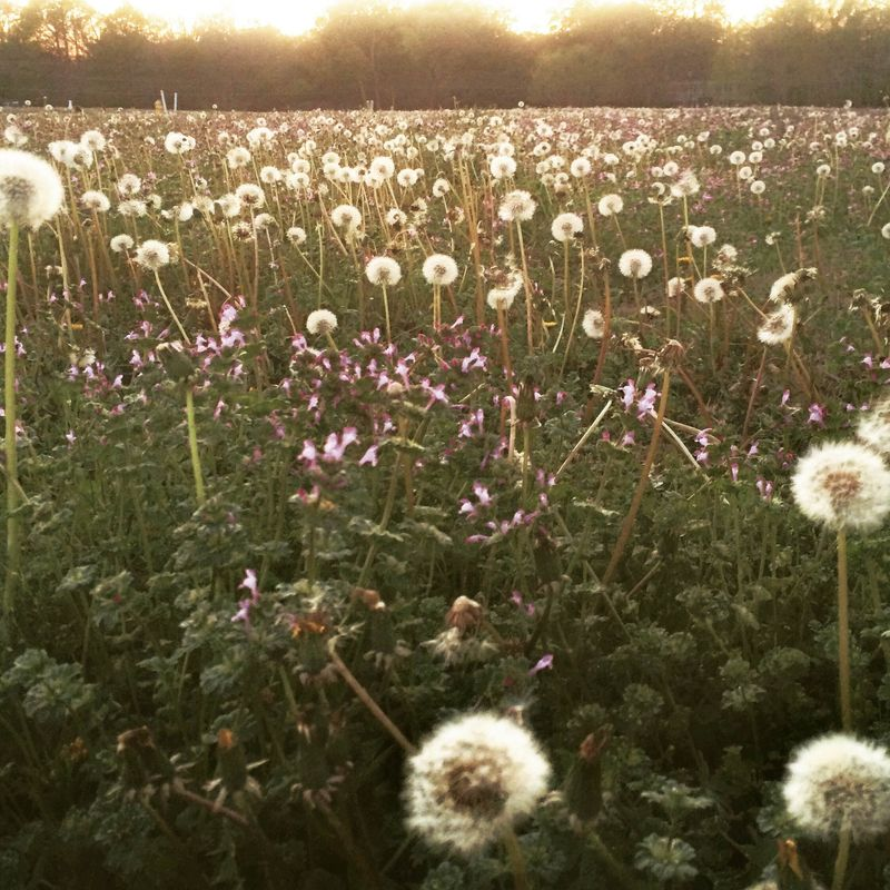 Meadow of wishes and stars