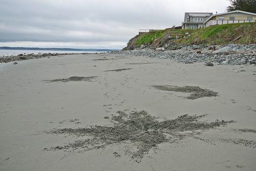 Dog beach art