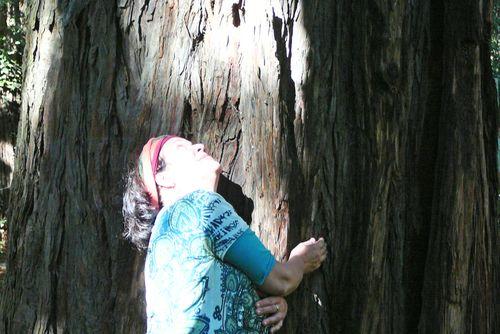 Redwood at henry's