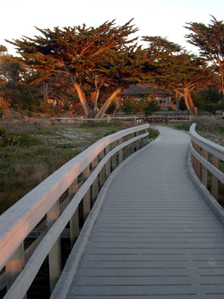 View from beach walk, Asilomar