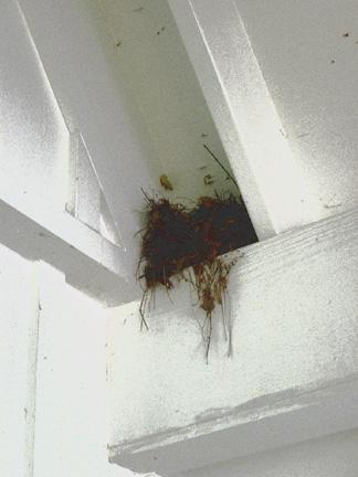 Grace nest