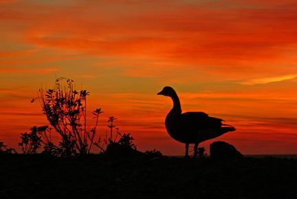 last bird against a fiery sky