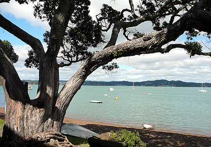 Russell_harbour_tree
