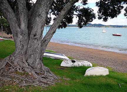 Russell_harbour_tree_1