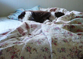 Bed_hog_smaller