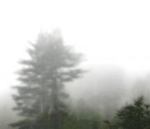 Fog_square