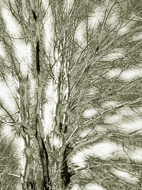 Branches_1_solarized