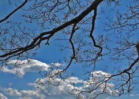 Branches_smaller