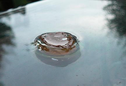 Leaf_drop_smaller_3