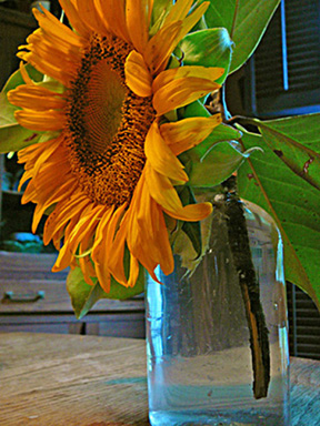 Table_sunflower_profile_small