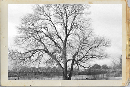 Paul_road_tree_framed