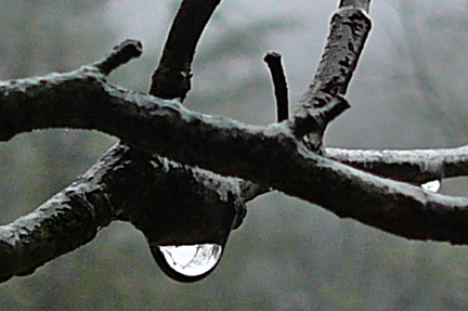 Tree_teardrop
