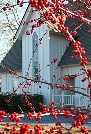 Berry_photo_for_christmas_card_deta