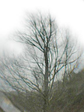Tree_orb