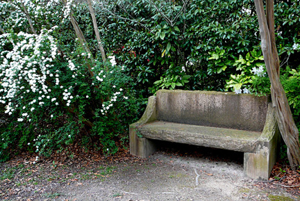 Bench_and_blossoms_for_orn