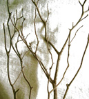 Branches_for_ornamental_1