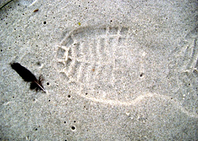 Coastprint