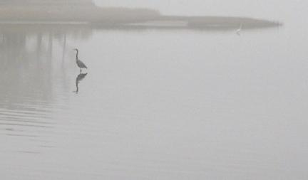 Egret_in_salt_marsh_fog