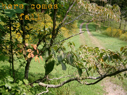 Here_comes_fall_1
