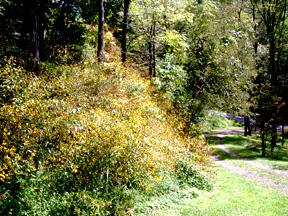 Last_wildflowers