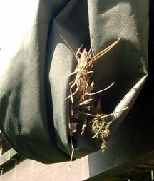 Wrens_nest